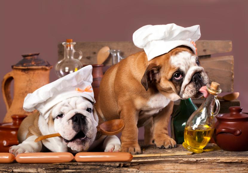 englische Bulldogen mit Kochmützen