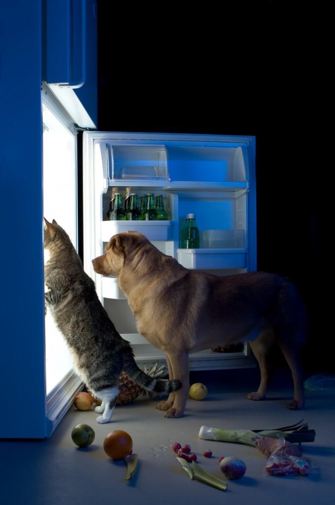 richtiges futter für hunde