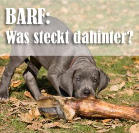 BARF: Was steckt dahinter?