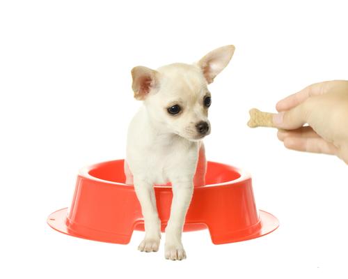 Hund im Hundenapf