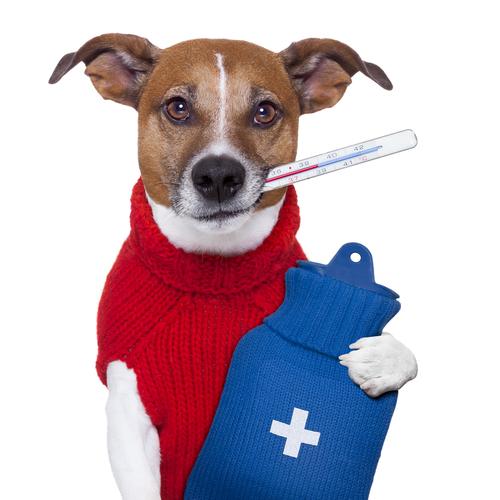 Versicherung für den Hund