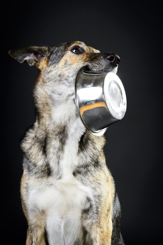Bekommt mein Hund wirklich alles was er braucht? Wenn Sie sich unsicher sind, fragen Sie einen erfahren Tierernährungsspezialisten