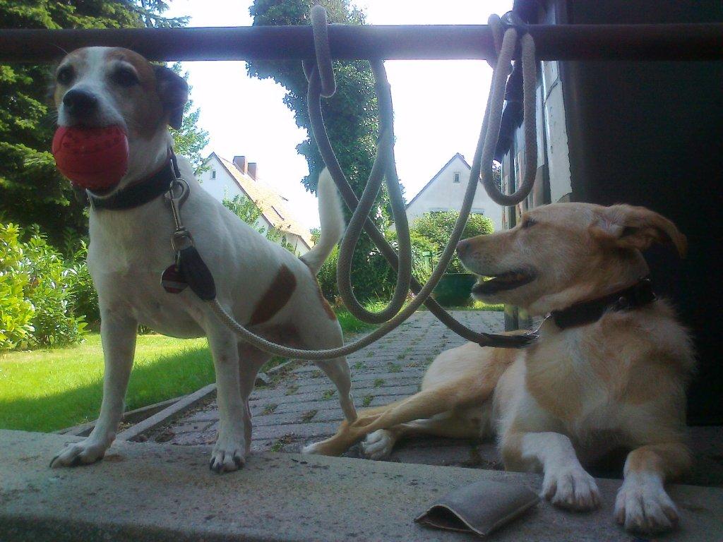 Severine selbst kann sich ein Leben ohne Hund garnicht mehr vorstellen.