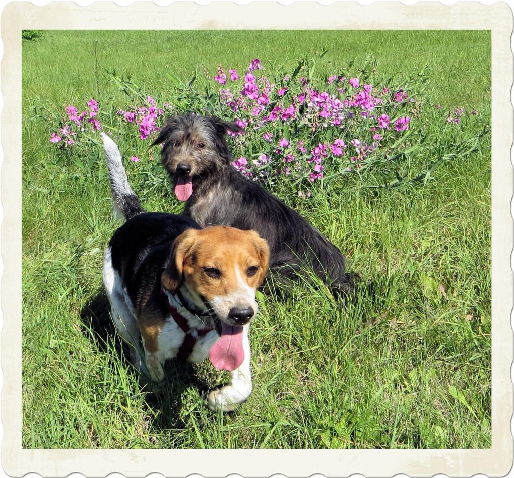 Die beiden in einer Blumenwiese.