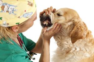 Hundekrankenversicherung Hund beim Tierarzt