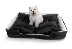 Hund auf Smoothy Bett