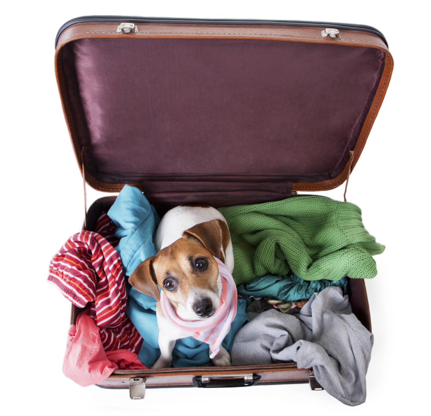 Hund in Koffer