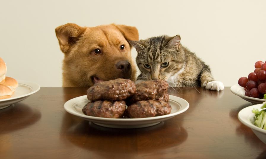 Hund Katze Tisch