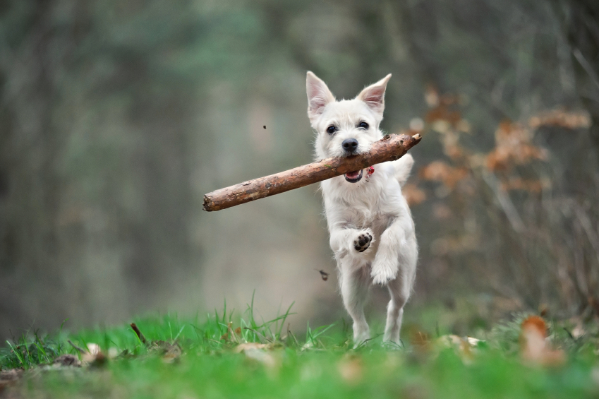 Hund freudig