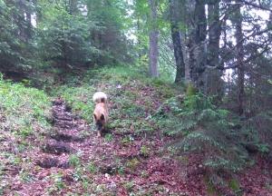 Sammy im Wald Hund