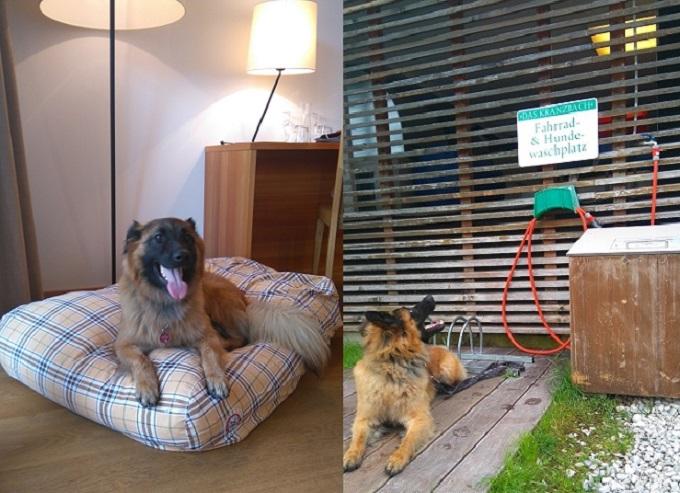 Hundewaschplatz und Hundekissen