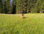 Hunde Training