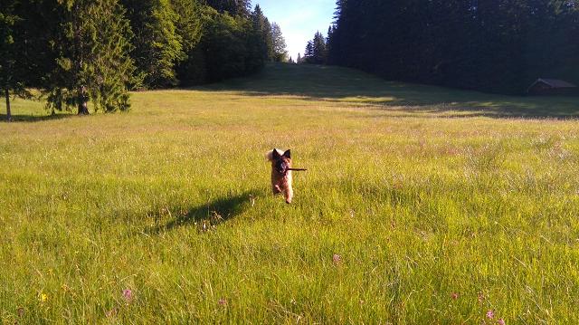 Sammy Hund bringt Stock