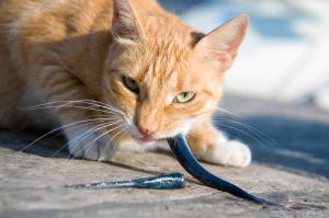 Katze mit Fisch