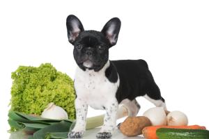 Welpe mit Gemüse