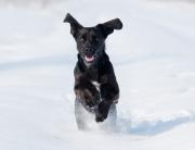 schwarzer Hund im Schnee
