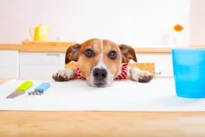 Hund am Esstisch