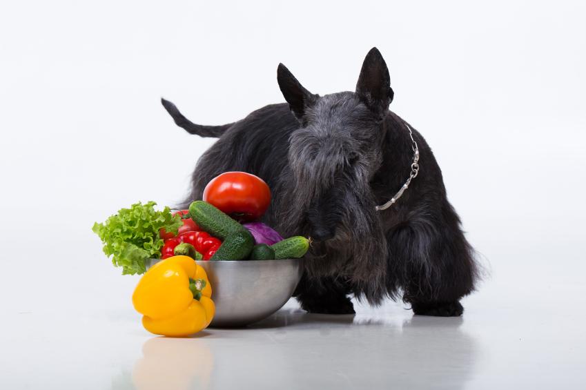 Gemüse mit Hund